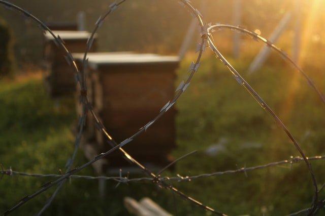 Bienenbeuten hinter einen Zaun. Das sieht schon sehr professionell aus aber am Anfang steht immer die Frage: Wie werde ich Imker?