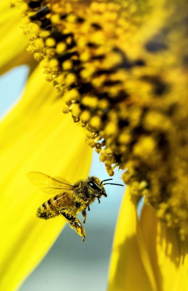Karten Motiv Nr. 2 für die Bienenpatenschaft als Geschenk