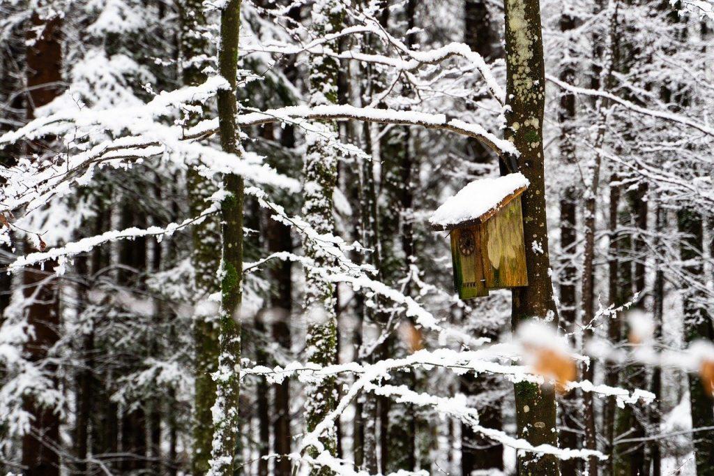 Nistkasten im Winter. Ihr solltet die Nistkästen reinigen. Die Vögel werden es euch danken.