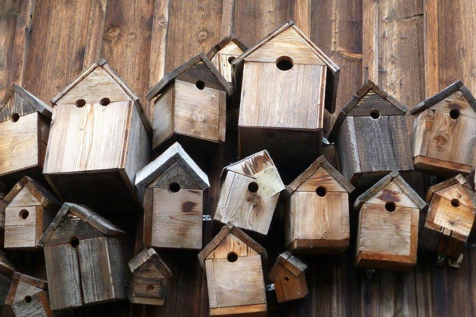 Nistkästen reinigen und Vögeln helfen