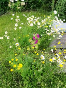 Blühpatenschaft verschenken